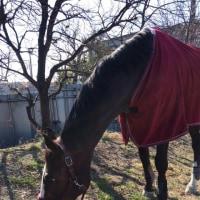 のんびり馬休日