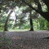 京都植物園6/28