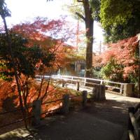 どろうぼう橋の紅葉