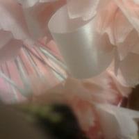 さくら花!