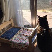 話題のIKEAの猫ベッド