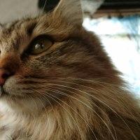 ふわふわな毛、綺麗な瞳で何を見つめてる・・・・?