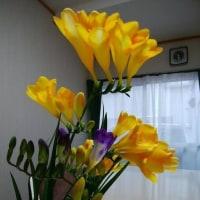 お寺の庭の花と、I さん宅の花と、