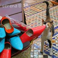 モロッコのバブーシュと猫