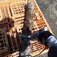 椎茸の種駒菌打ち