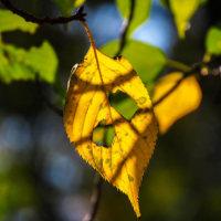 秋を探しながら散歩
