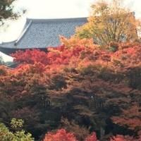 東福寺で♪ニッコリ紅葉