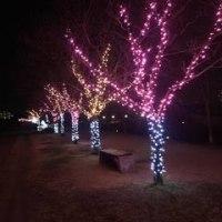 狭山池はライトアップ。今年はさやりんも。。