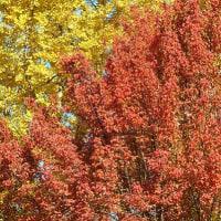 赤い葉と黄色い葉