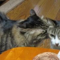 新入り猫 vs 先住猫 その後
