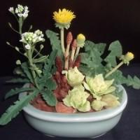 樹脂粘土 春の野花の寄せ植え