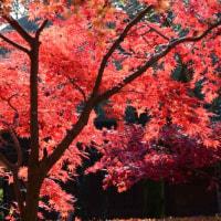 平林寺の紅葉(2016/11/22)