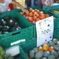 キッズファームで収穫、販売体験