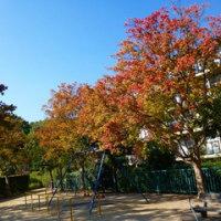 ご近所の秋色