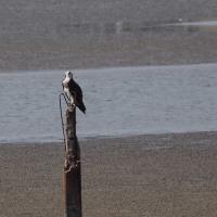 10月16日の鳥撮り2・・・