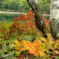 琵琶池紅葉
