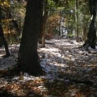 紅葉と雪の高尾