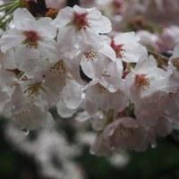 雨の箱根旅*③