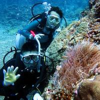 ダイバーの誕生! 沖縄ダイビング 那覇シーマリン