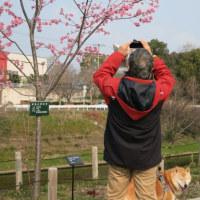 ムチャンポ春景色