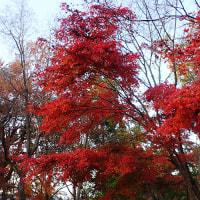 高尾山を紅葉見るハイキング
