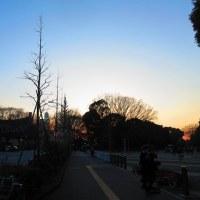 代々木公園の夕焼けとトコろん(#^^#) そして、別れの訪れ
