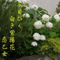 写真と俳句(恋乙女)