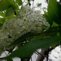 復興相辞任 ガンは失言 沖縄変貌へ 埋め立て