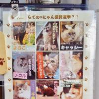 猫ちゃん話③「ねこカフェ&猫酒場 らて」長岡市大手通アオーレ隣 時代は心和ます猫ブーム!
