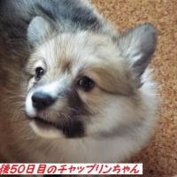 のんちゃん帝王切開にて出産