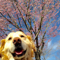 春ですね〜🌸🌷