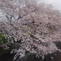 六周年!(^^)!  【香里園 かとう整骨院】
