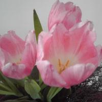 春 花 チューリップ