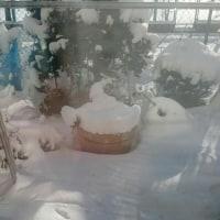 昨日は雪、今日はつるつる