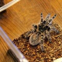 新しいクモがやってきた♪