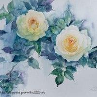 白い薔薇を描く