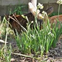 昨日は立春 朝からぽかぽか陽気子供達(=^・^=)も庭に全員集合