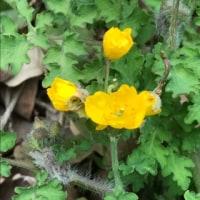 小さな山野草突然に花を見つける。