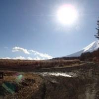 森の中の光採集 北富士の森
