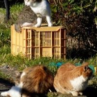 猫王のテラス…多摩川猫シリーズ