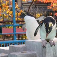 秋らしいペンギン写真