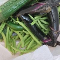 野菜収穫♪