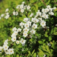 山下公園 花いっぱい 2