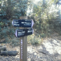 天園ハイキングコース