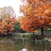 紅葉が綺麗な公園