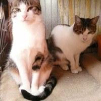 きょうのネコたち