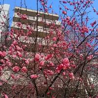 梅の花咲く頃・・・(^_-)-☆