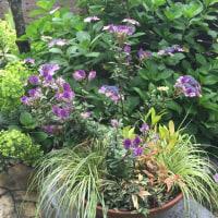 紫の花好きです