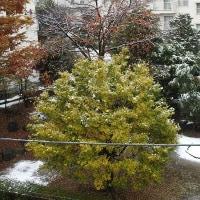 初雪(平成28年11月24日)。