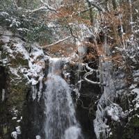 冬のくじゅう23(ヨシ)